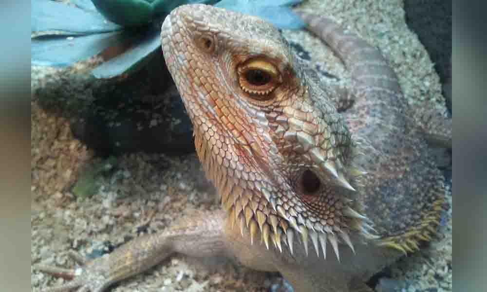 Asegura Profepa 149 especies de animales silvestres en Tijuana