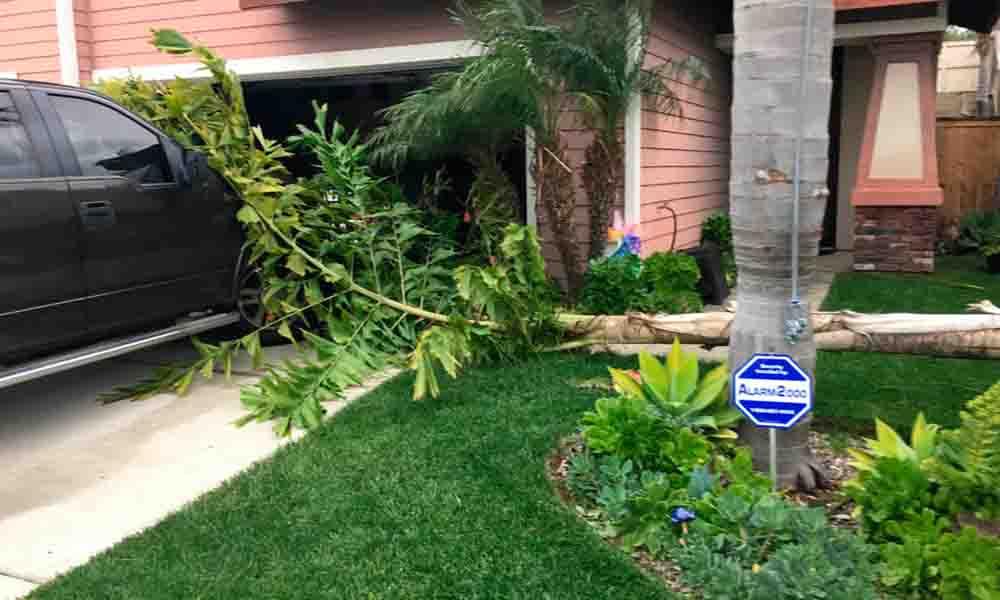 Árboles caídos y coches aplastados fue el saldo de la tormenta en San Diego