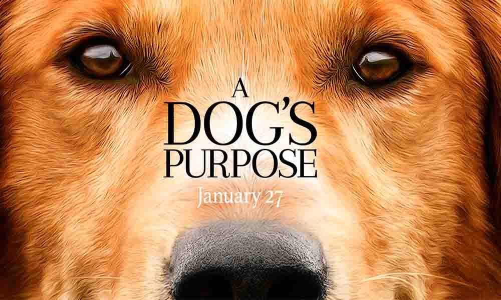 PETA convoca a boicotear la película A Dog's Purpose