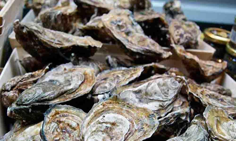 Declaran veda sanitaria en consumo de mariscos provenientes del Golfo de California por alta toxicidad