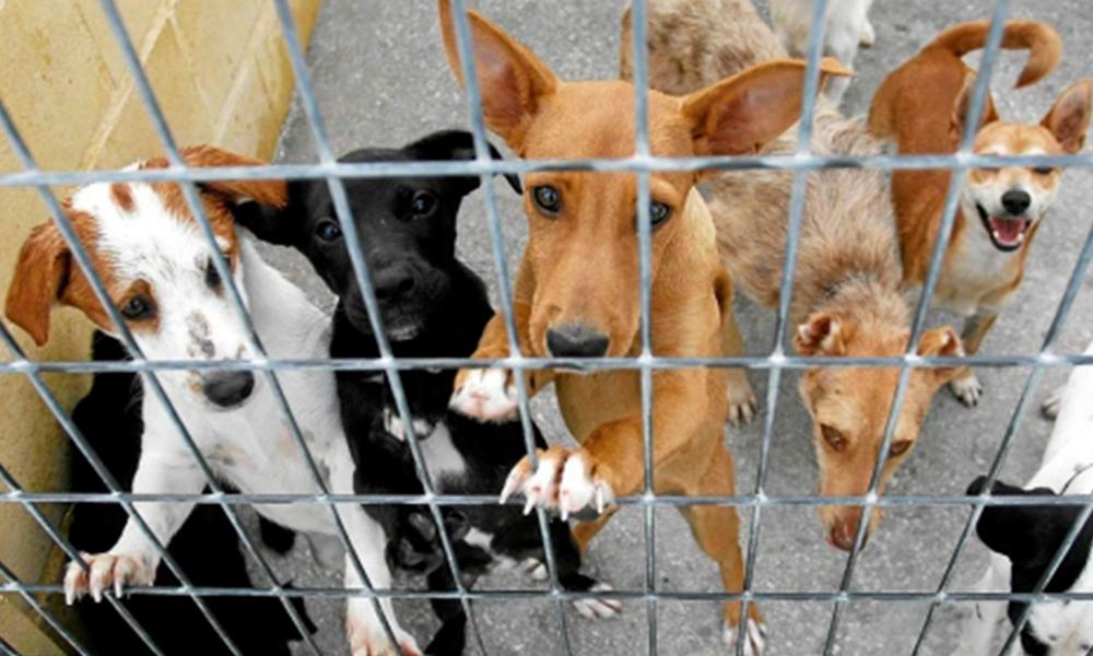 Estudiante mexicano desarrolla croqueta anticonceptiva para perros
