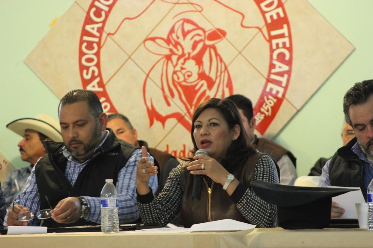 La ganadería, polo importante del desarrollo de Tecate