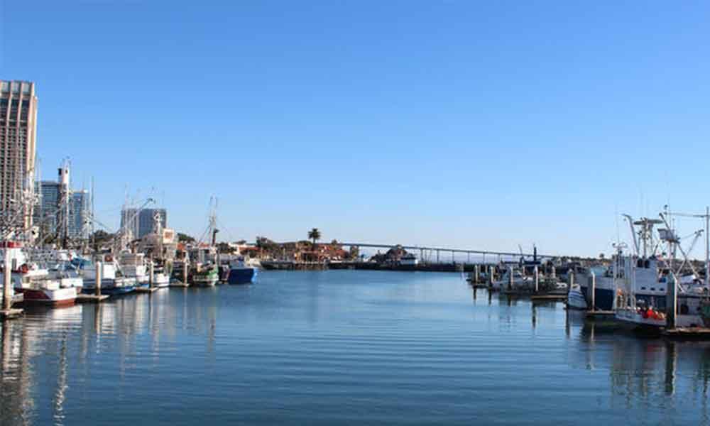 Ballena bebé es buscada en Bahía de San Diego