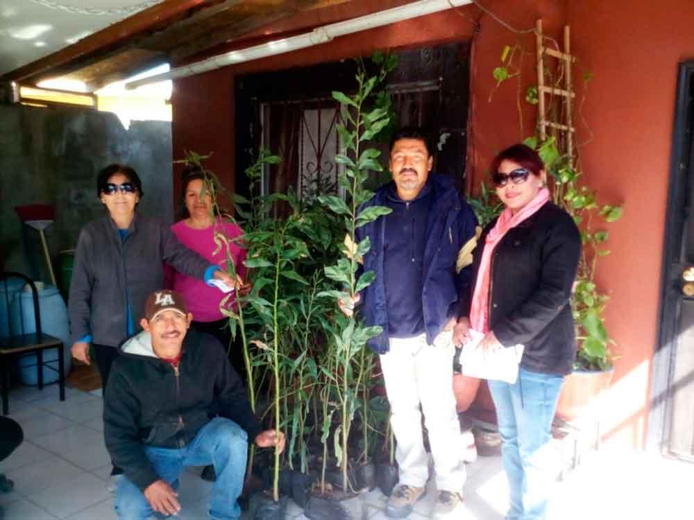Donan mil árboles para reforestar las delegaciones de Tecate