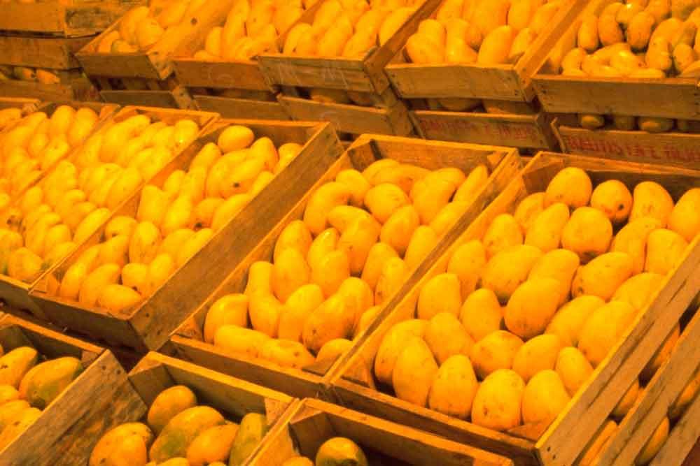 Ni Trump los detiene, mexicanos colocan 12.5 toneladas de mango en EU