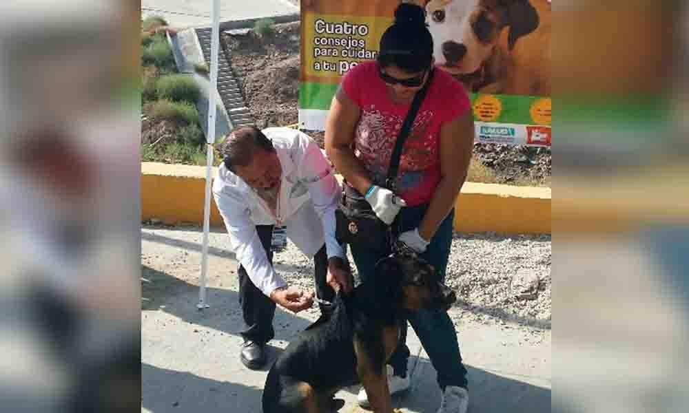 Durante el 2016 se vacunó a más de 160 mil mascotas contra la rabia en BC
