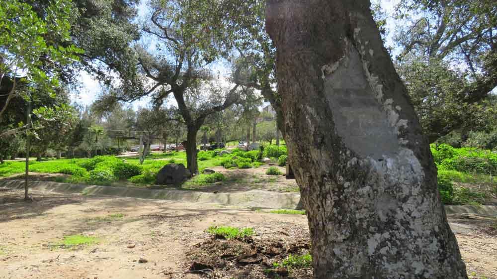 Realizan limpieza en Parque Los Encinos