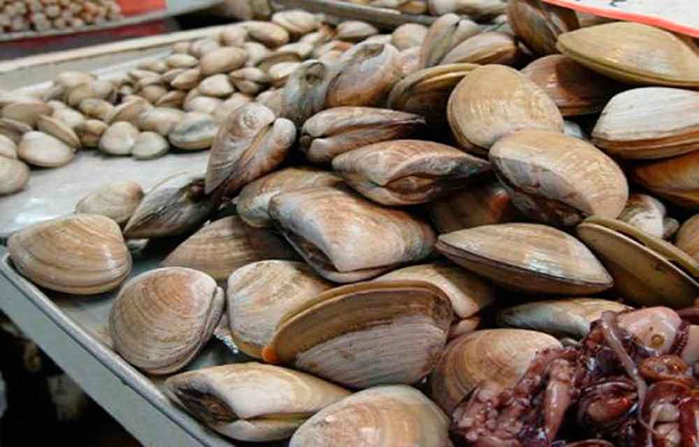 Se retira la veda sobre moluscos en Baja California