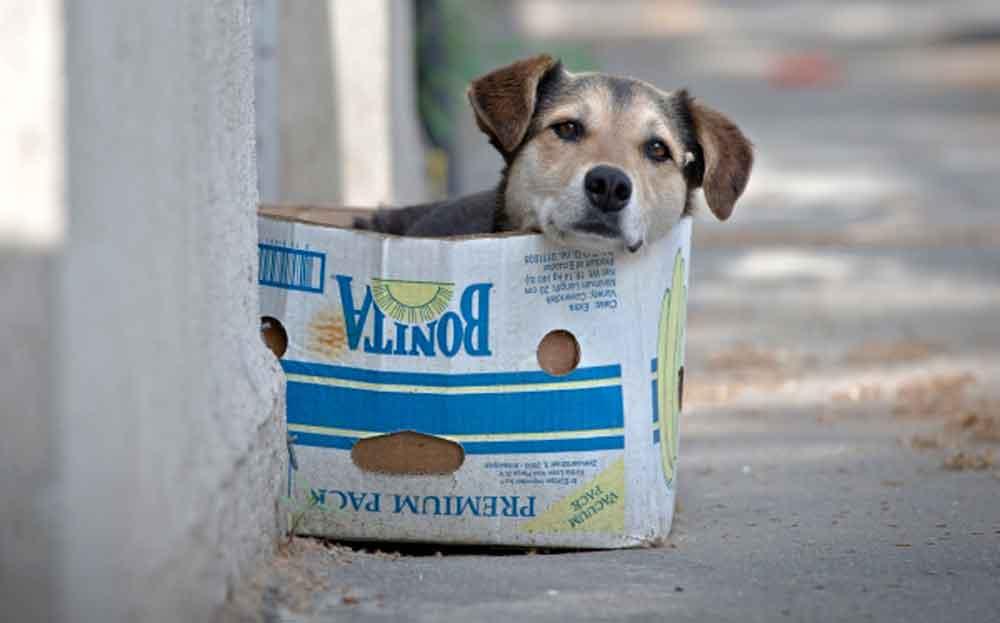 Perros callejeros, un problema en BC: Encuestadora IMERK