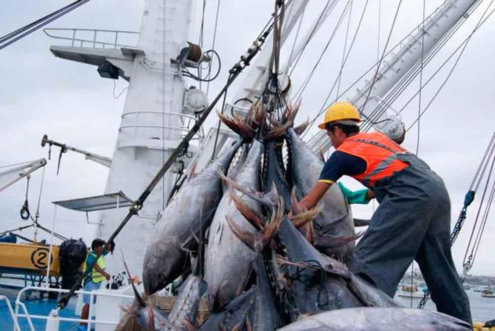OMC autoriza sancionar a EU por bloquear la entrada de atún mexicano
