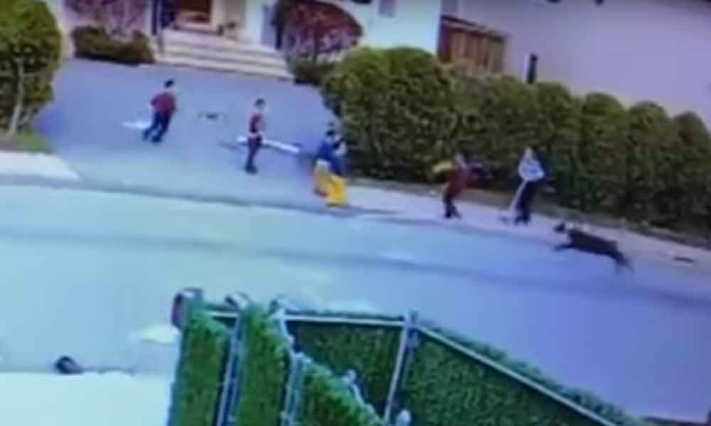 Terrible ataque de Pitbull a niño fue captado en video