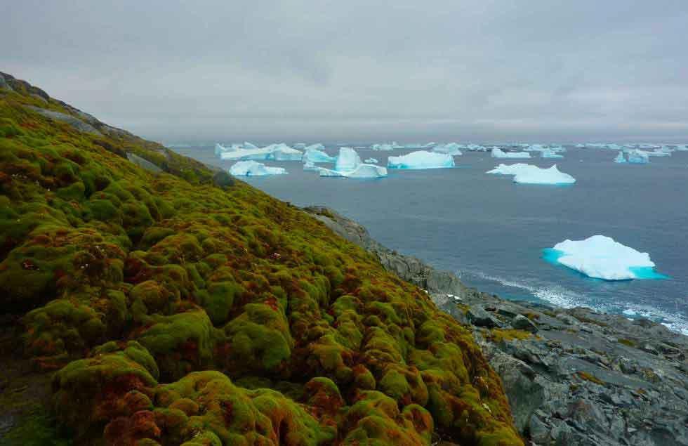 Crece pasto en la Antártida debido al cambio climático