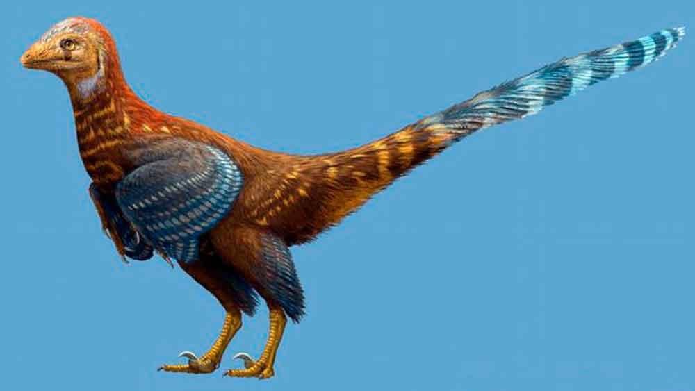 Descubren fósil de nueva especie de dinosaurio con plumas