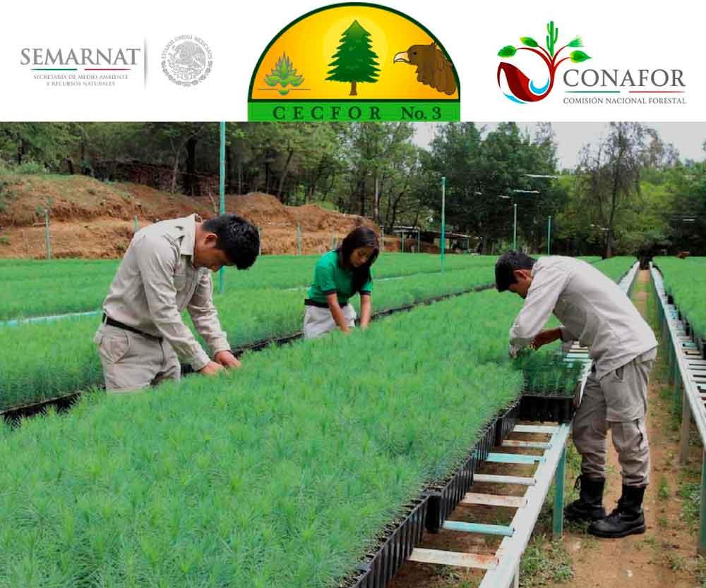Invitan a jóvenes de BC a estudiar la carrera de Técnico Forestal