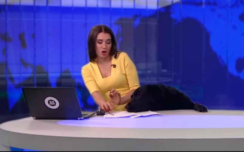 ¡Sorpresa! Perro interrumpe noticiario