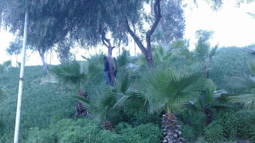 Amanece cuerpo colgado de un árbol en Tijuana