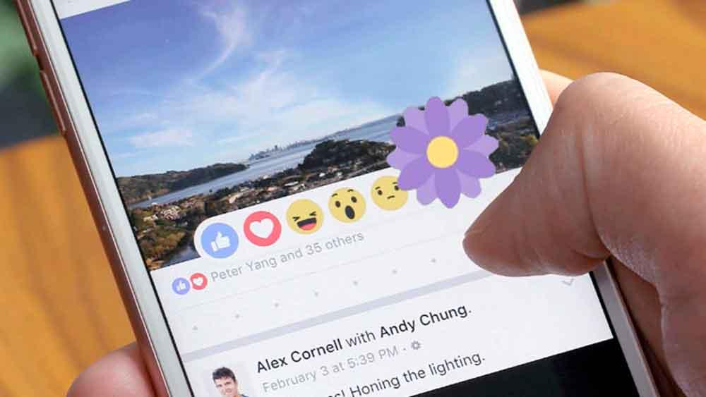¿Qué significa la flor morada que ha aparecido en las reacciones de Facebook?