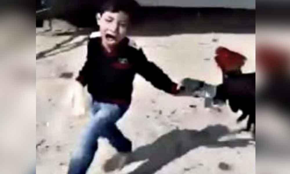 Muere niño de un infarto, tras ser perseguido por un gallo