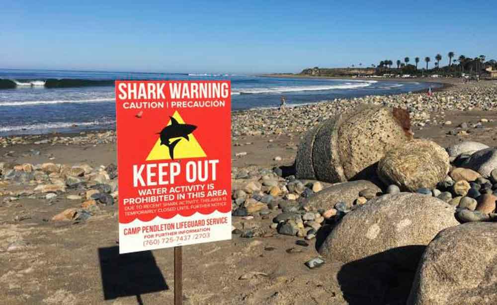 Mujer es atacada por tiburón en San Diego; le arrancó parte del muslo