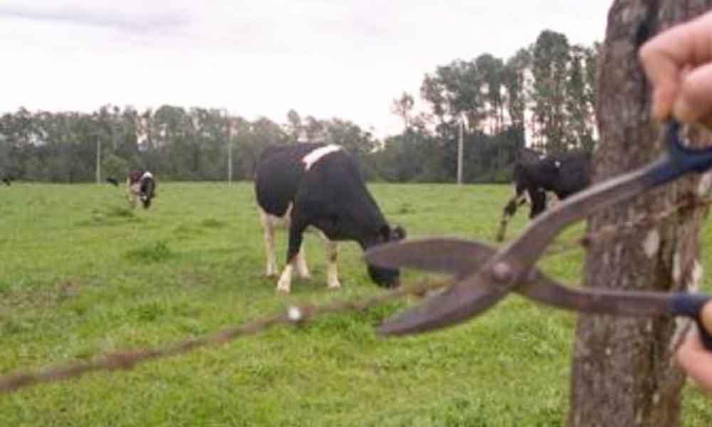 Capacitan a policías de Tecate para evitar robo de ganado