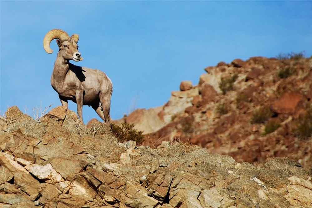 En peligro de extinción más de 42 especies en Baja California