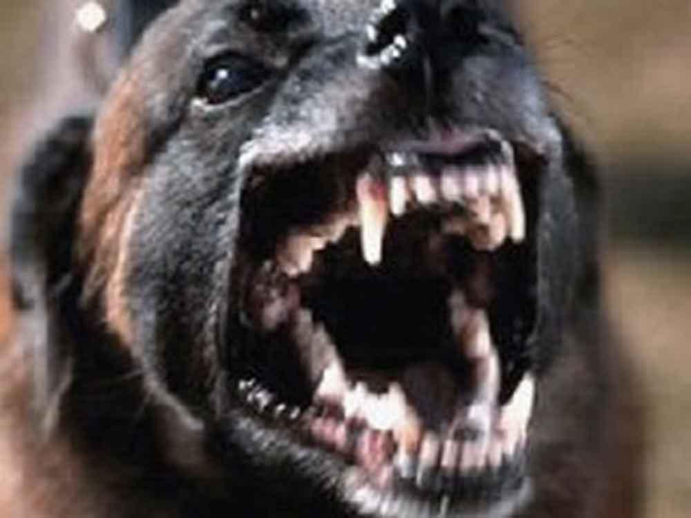 Jauría de perros asesina y devora brutalmente a un hombre