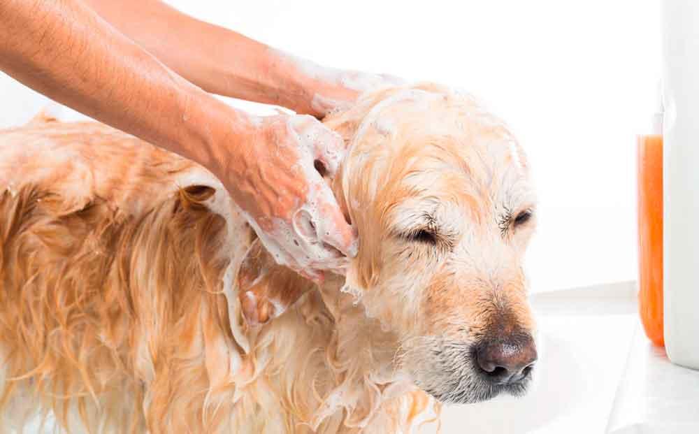 Recomienda IMSS adoptar higiene en mascotas