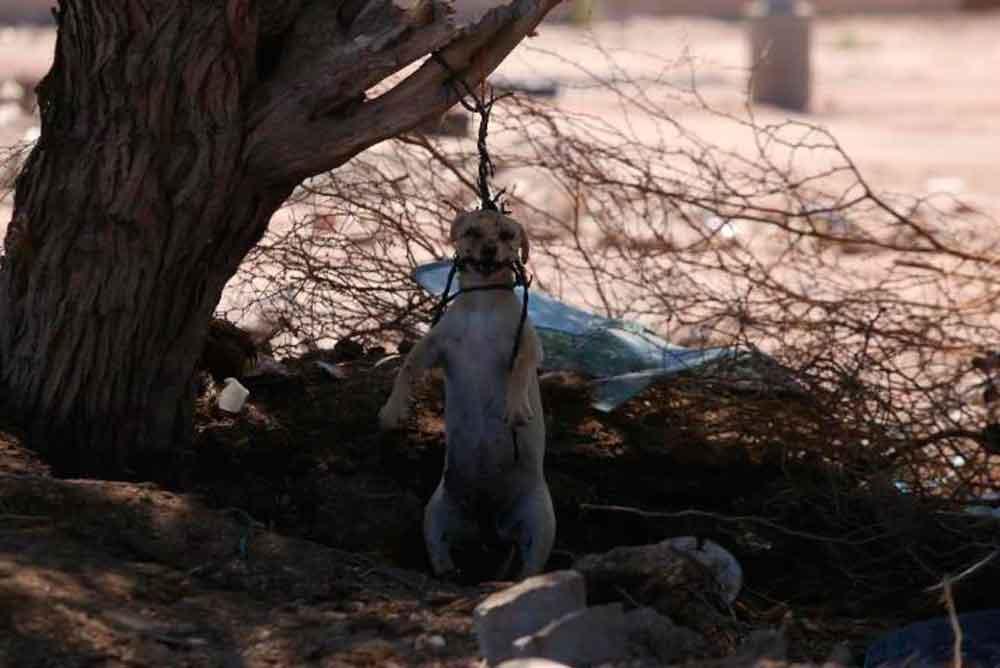 Reportan maltrato animal en Mexicali: cuelgan a perrito