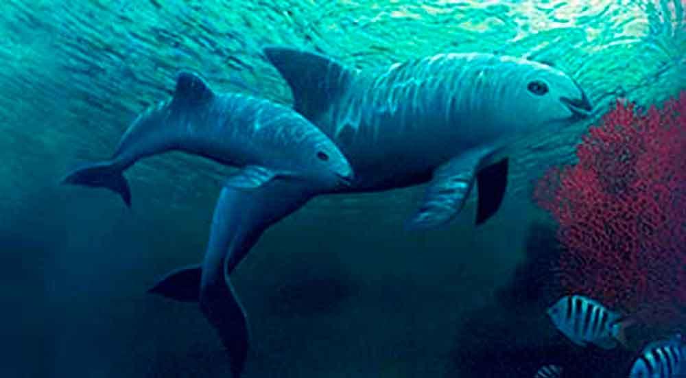26 especies de peces podrían desaparecer, alerta UNAM