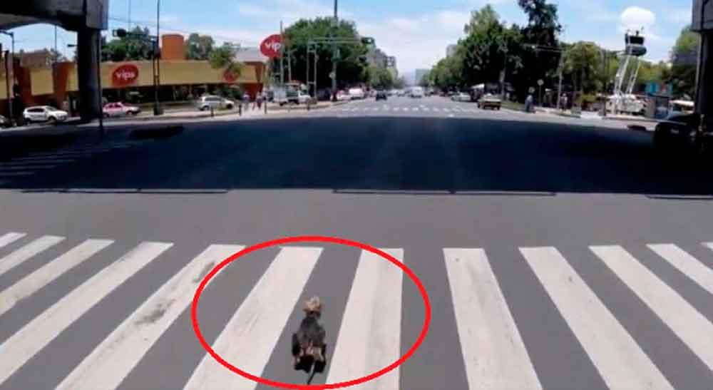 """Volaris premia a ciclista que rescató a perrito """"correlón"""""""