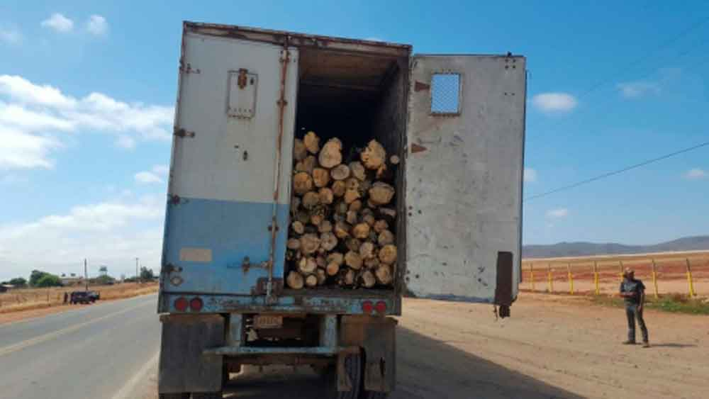 Decomisan 26 toneladas de Yucca en Ensenada