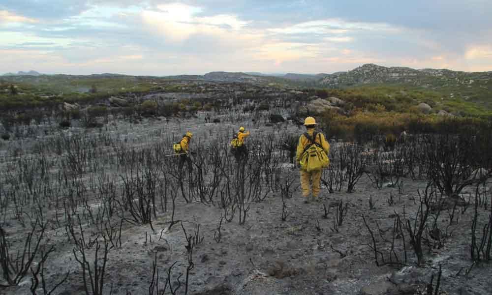 Controlan incendio forestal de Sierra Juárez en Ensenada en un 80%
