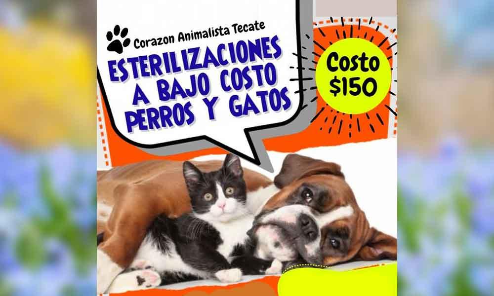 Esterilizaciones de mascotas a bajo costo en Tecate