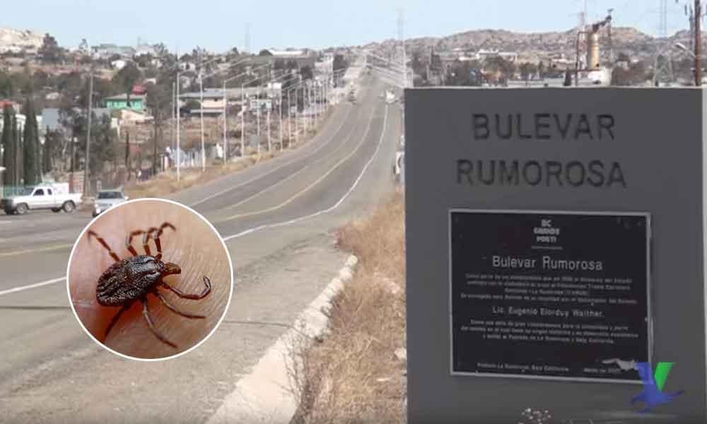 Muere hombre por mordedura de garrapata en La Rumorosa