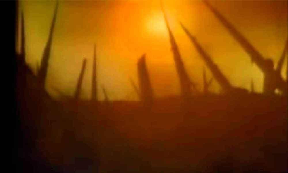 """Nuestro planeta ha entrado a """"una sexta extinción en masa"""", advierten"""