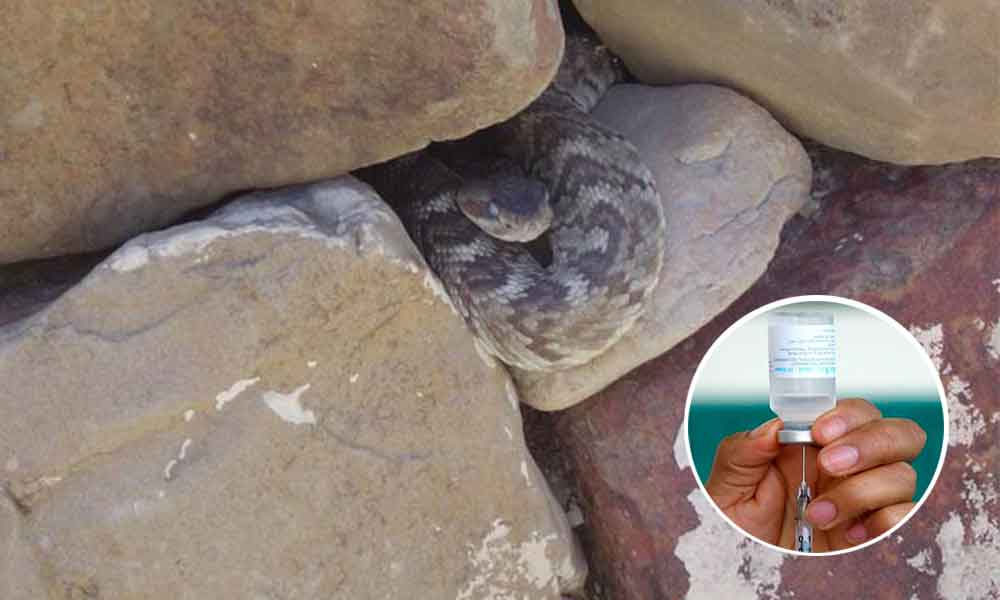 Centros de Salud en Tecate sí cuentan con antídoto para mordedura de víbora de cascabel