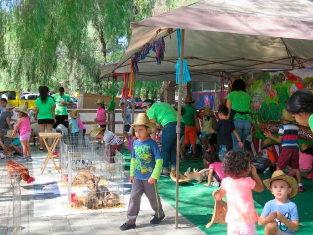 Ofrece Ayuntamiento de Tecate diversos cursos de verano a niñas y   niños tecatenses