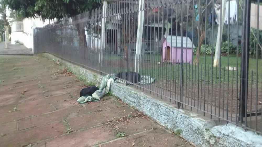 Cachorro comparte su manta con su amigo de la calle