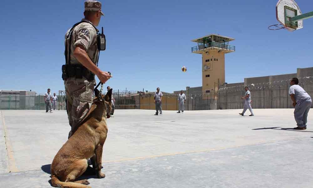 Llegan nuevos agentes caninos a Baja California, impondrán orden en penales