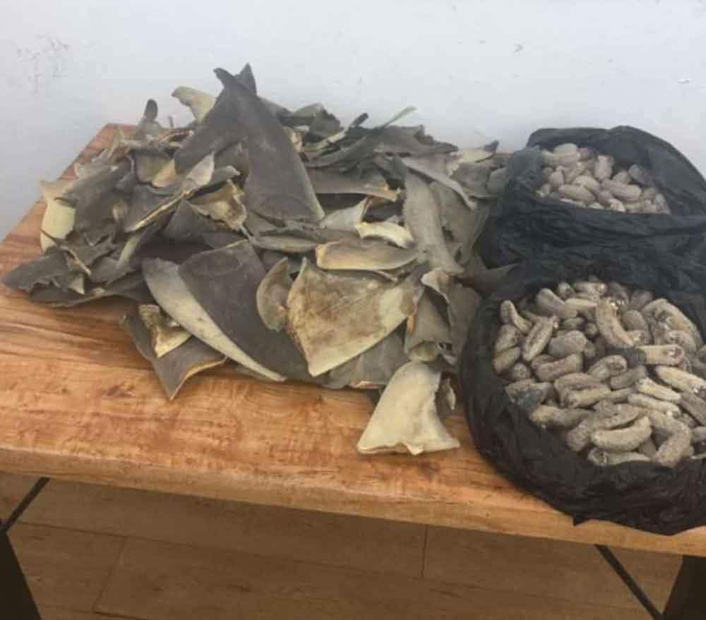 Localizan 205 aletas de tiburón y 345 piezas de pepino de mar en paquetería de Tijuana