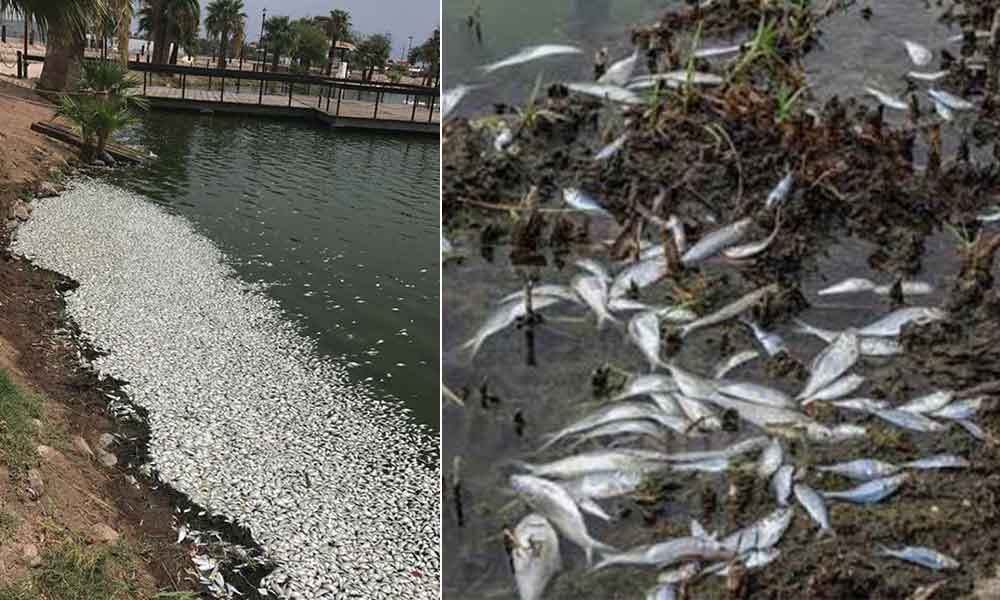 Miles de peces amanecen muertos en laguna de Mexicali