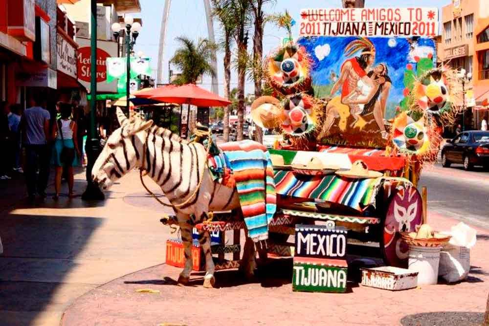 Burro Cebra ya no será patrimonio cultural de Baja California