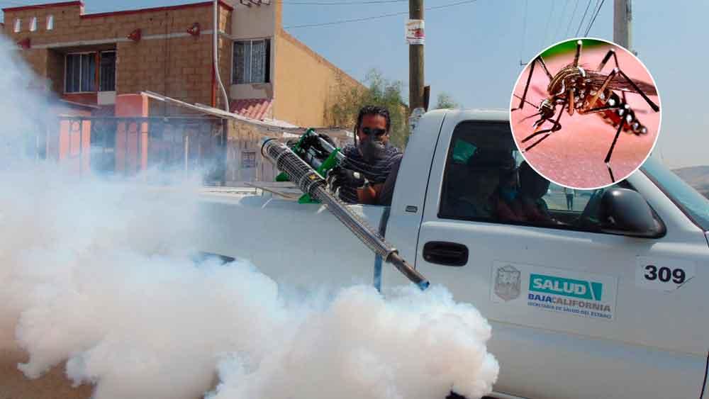 Emiten medidas preventivas para evitar el Dengue en Baja California