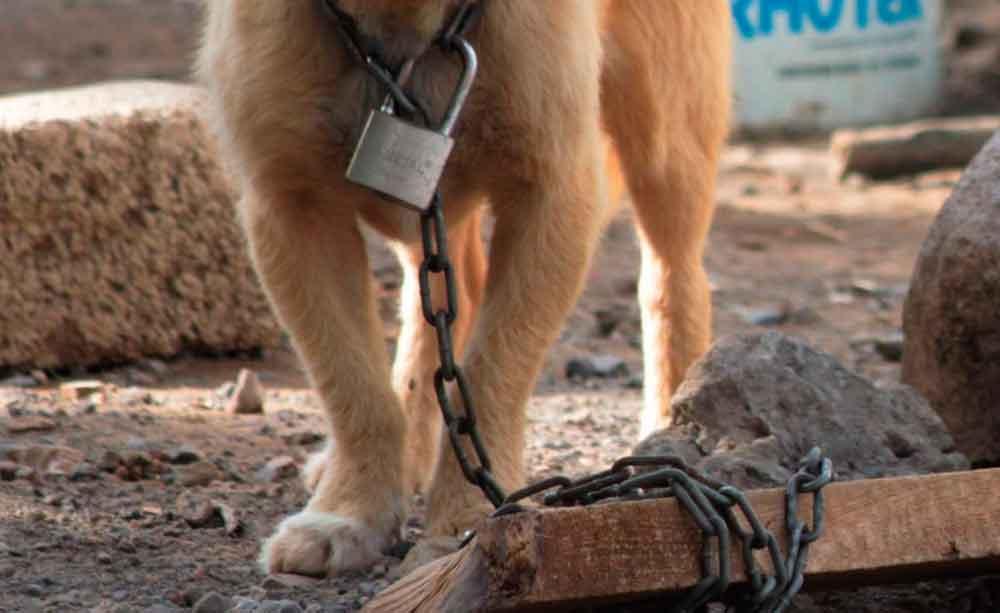 Dictan primera sentencia por maltrato animal en Ensenada