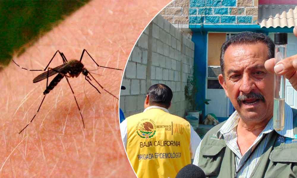 Intensifican monitoreo para evitar mosquito transmisor del dengue y chinkunguya