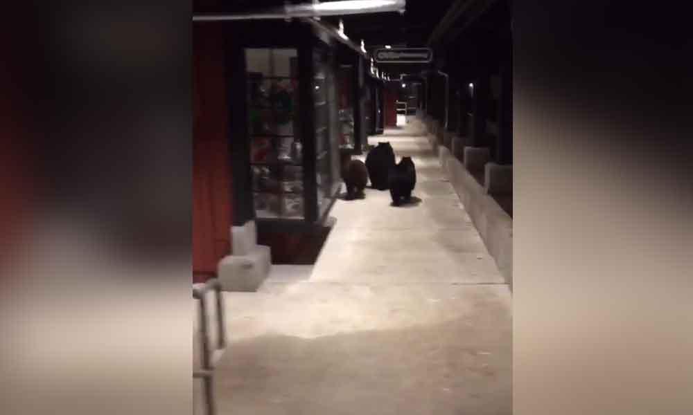 Captan a familia de osos en centro comercial de California