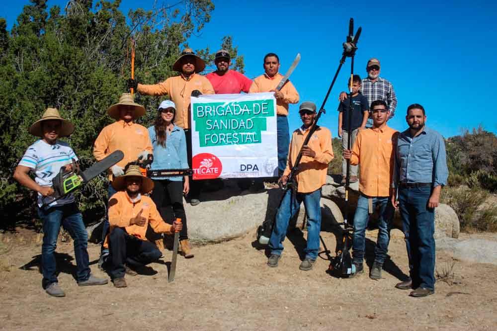 Realizan acciones preventivas para proteger la flora endémica de Tecate