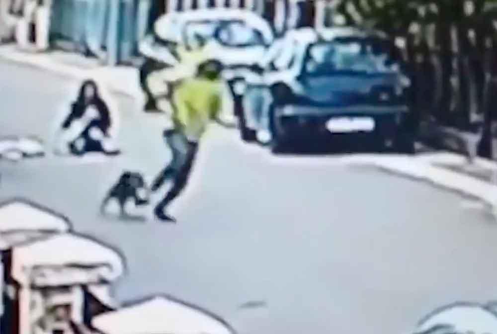 Perro callejero salva a mujer de asalto