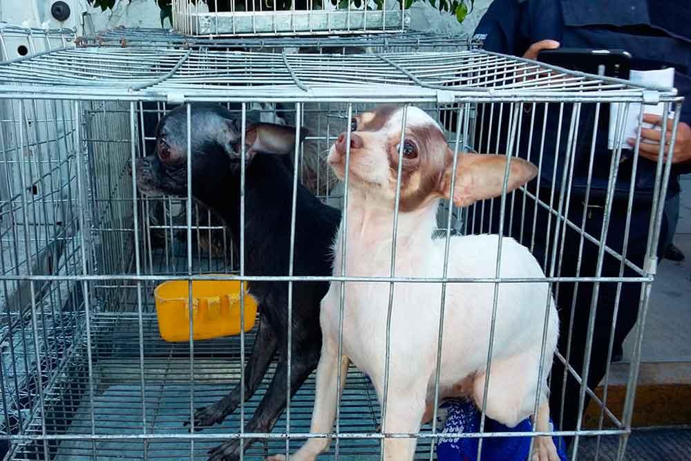 Buscan prohibir la venta de mascotas en vía pública