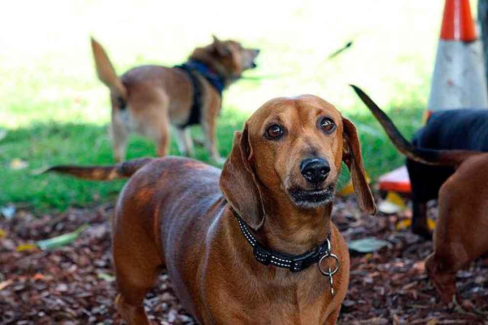 Alertan por golosinas para perros que podrían matarlos